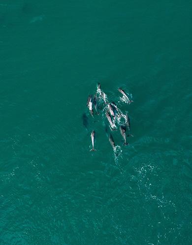 Excursions - Santuario dei cetacei, Charter Portofino - Yacht